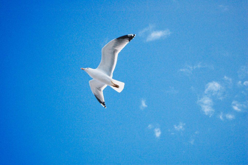 Seagull, Yukari Harada